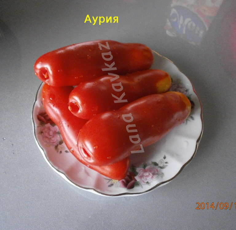 томат Аурия