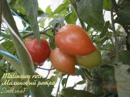 томат Малиновый ретро