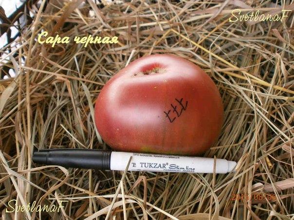 томат Сара черная