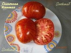 томат Solar flare
