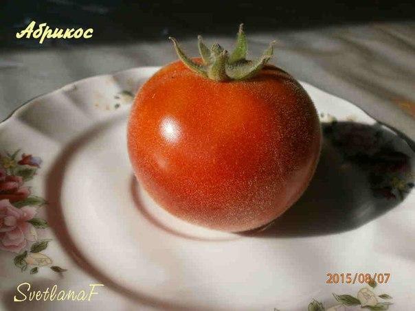 томат Абрикос (опушенный)