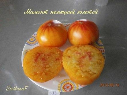 томат Мамонт немецкий золотой