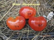 томат Минусинские шары