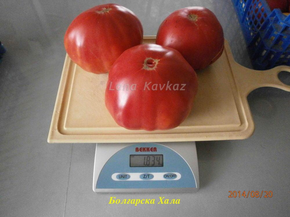 томат Болгарска Хала