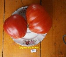 томат Груша-красная