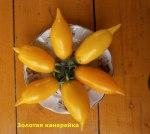 томат Золотая-канарейка
