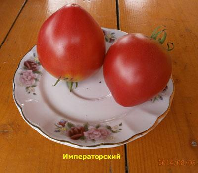 томат Императорский