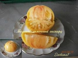 томат Большой лимонный оксхард