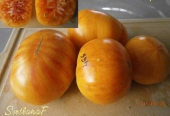 томат Оранжевая зебра