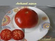 томат Любимый король