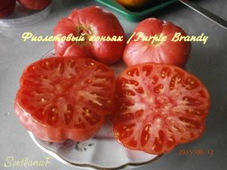 томат Purple Brandy