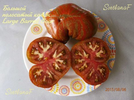 томат Большой полосатый кабан