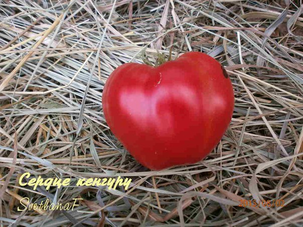 томат Сердце Кунгуру