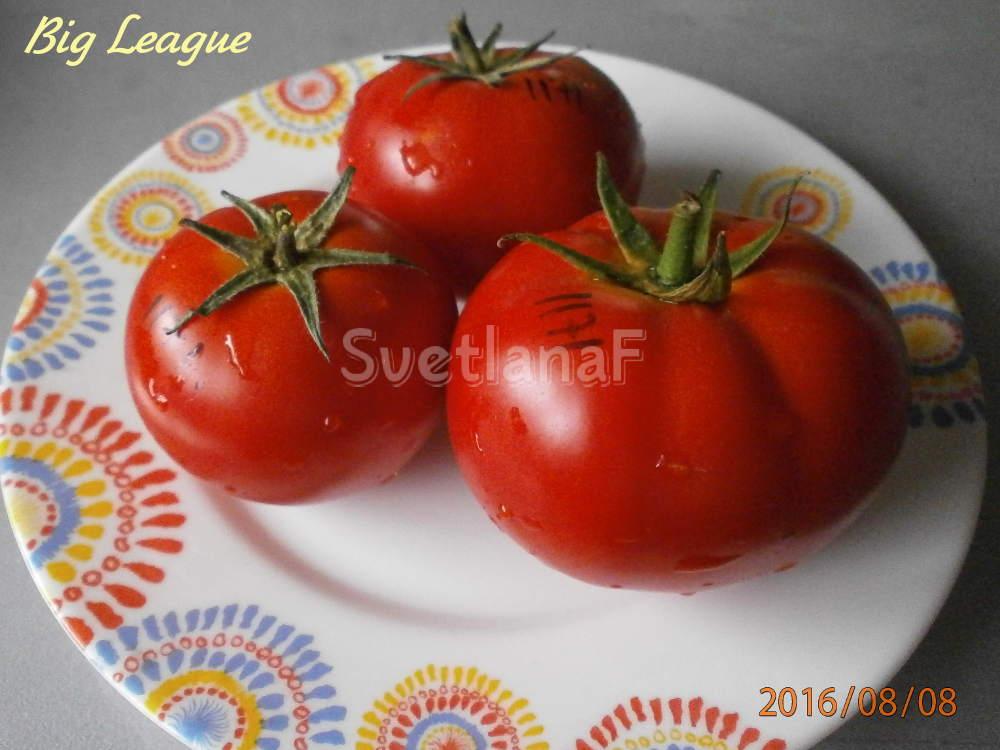 томат Big League