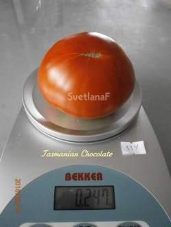 Tasmanian Chocolate