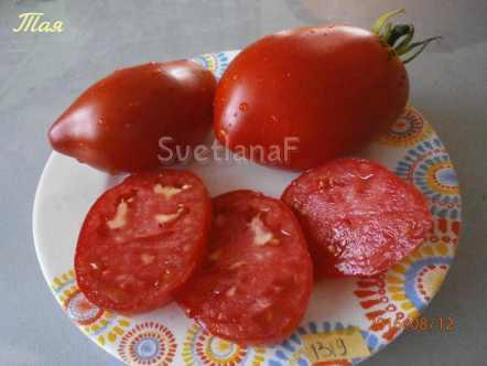 томат Белорусская Тая