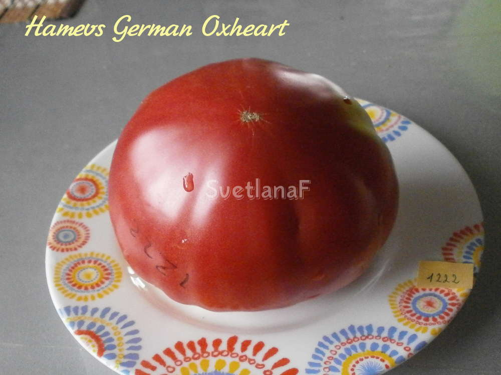 Hamevs German Oxheart