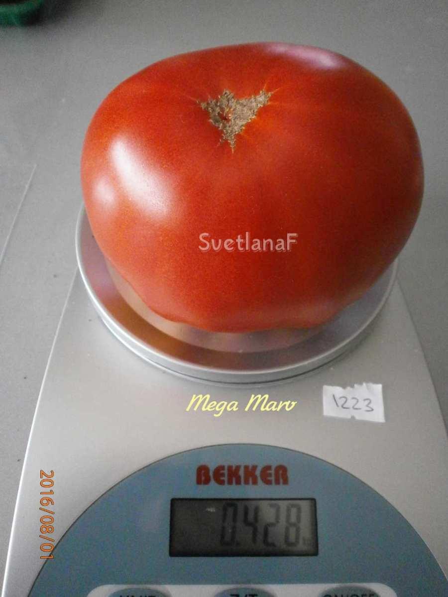 томат Mega Marv