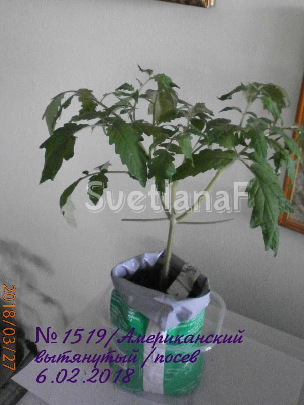 томат американский вытянутый