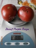 purpleReign Dwarf
