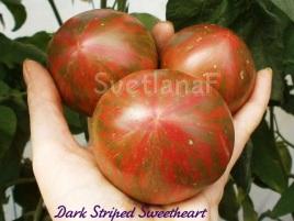 Dark Striped Sweetheart