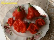pepper kolokolchik