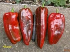 pepper kapia